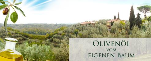 Olivenöl vom eigenen Baum ernten