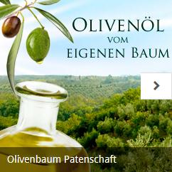 olivenbaum buchen