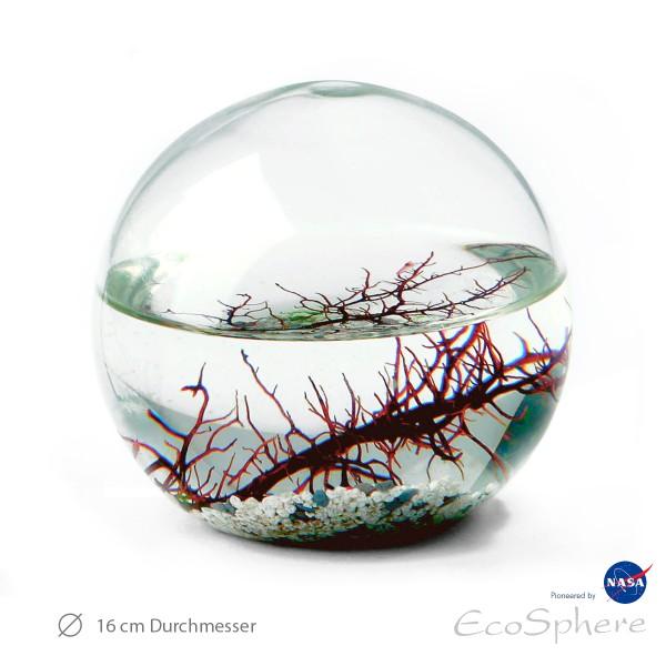 Ecosphere Kugel riesig