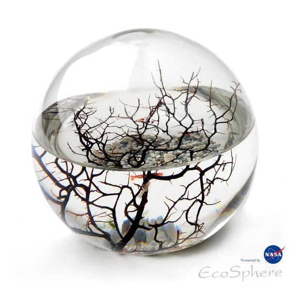 Große Ecosphere